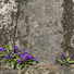 「菫」のサムネイル画像