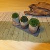 天然木の家で盆栽教室2