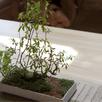 夢山荘で!盆栽作り体験教室1