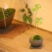 天然木の家で苔盆栽教室1