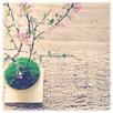 天然木の家で苔盆栽教室2