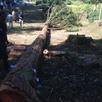 秋の伐採体験ツアー3