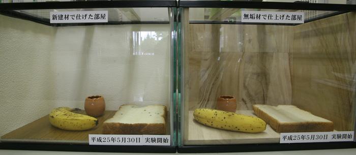 抗菌実験7日目.jpg
